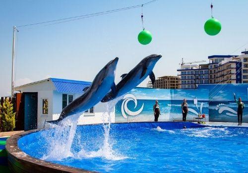 Отдых в Крыму в мае с дельфинарием